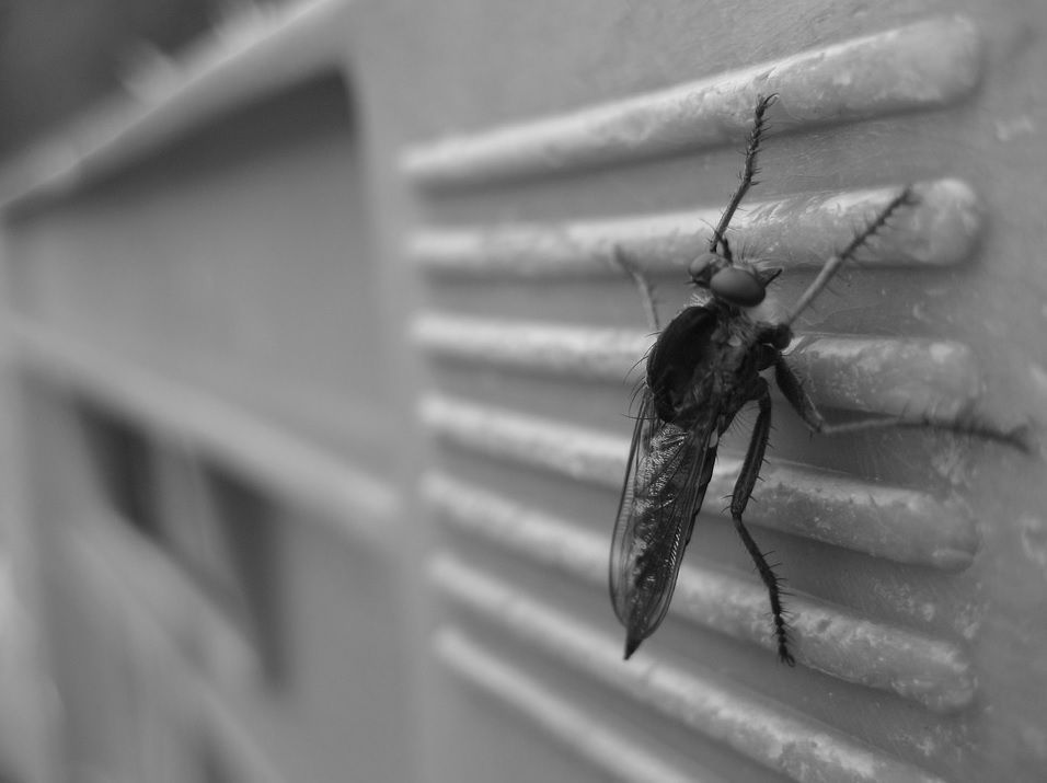 insecto-mosca-pared.jpg