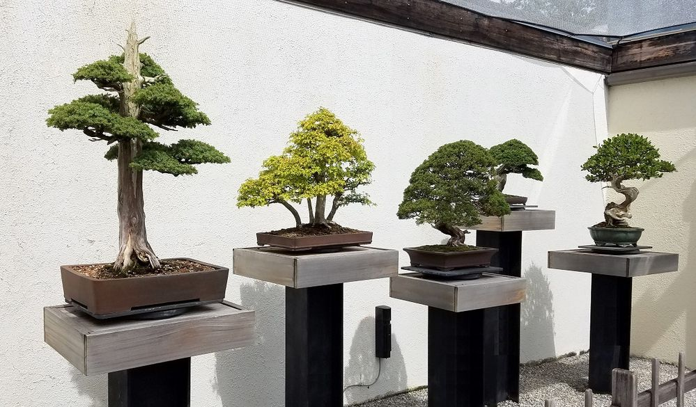 bonsai pedestal.jpg