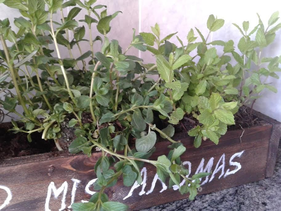 introduce plantas en macetero.jpg
