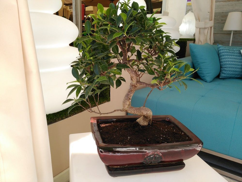 bonsai-interior.jpg