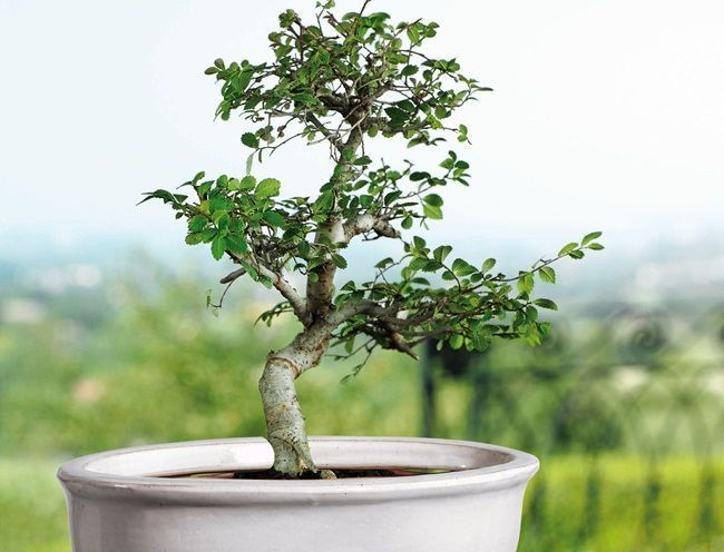 bonsai-planta-artificial.jpg