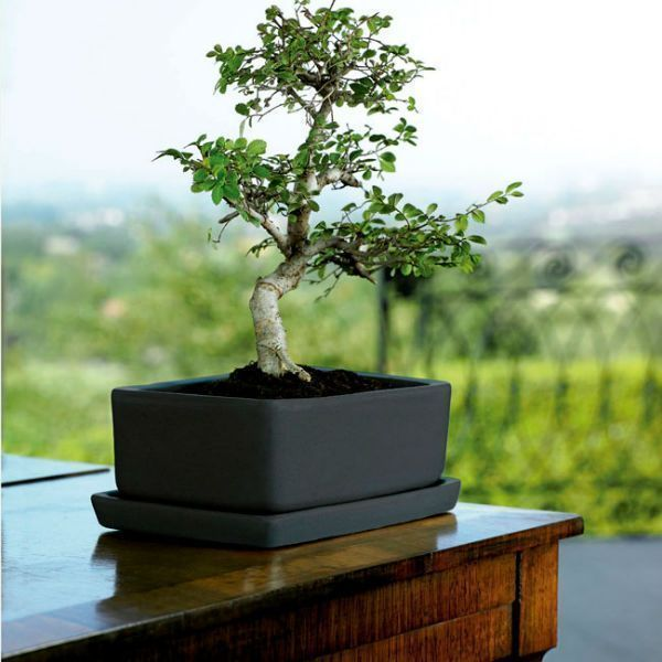 maceta-barro.bonsai.jpg