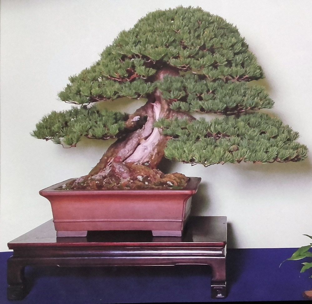 bonsai-mueble-expositor.jpg
