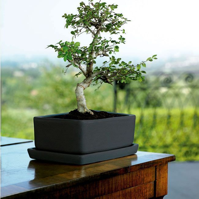 bonsai-maceta-interior.jpg