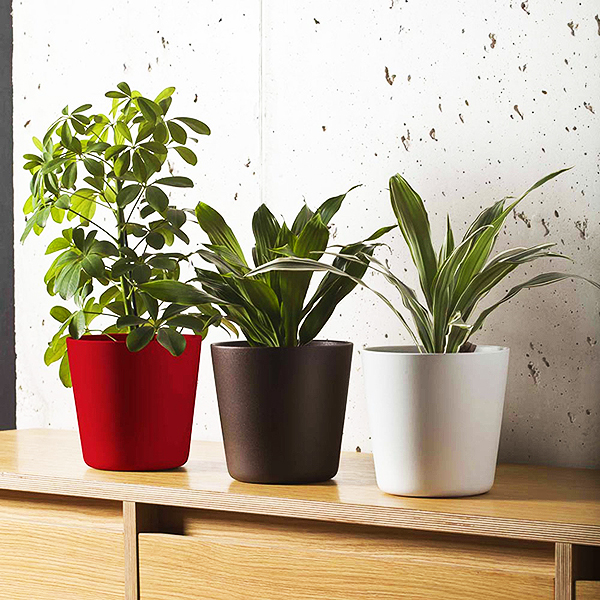 Plantas decorativas para interiores pclot color sky for Plantas decorativas de interior con poca luz